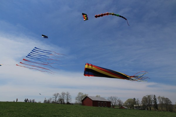 Catch Kites & Critters April 17