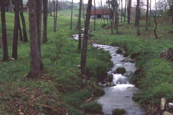 Conservation Easements – Why Now?