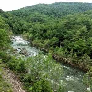 A raging river surrounded by green foliage